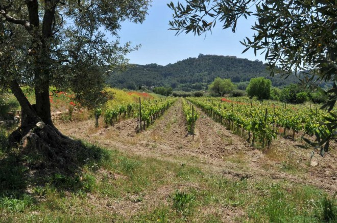 Domaine de l'Olivette vigne